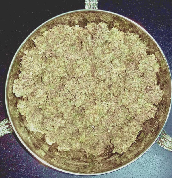 Gold Bowl of Marijuana